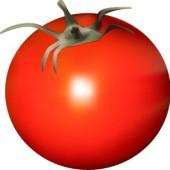 トマトの乾燥例