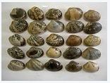 貝殻の粉砕